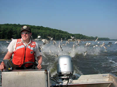 USFWS Heidi Keuler piloting boat with Asian carp in background  (photo by Chris Olds - USFWS)