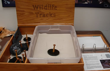 Wildlife tracks display