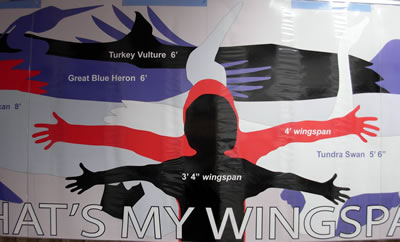 What's My Wingspan (poster)
