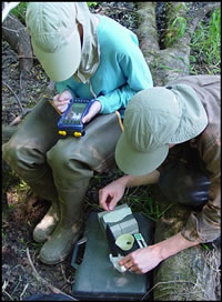 Biologists weighing a recently metamorphosed wood frog in northern Wisconsin. Courtesy of the U.S. Geological Survey.