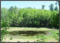 A wetland in northern Wisconsin. Courtesy of the U.S. Geological Survey.
