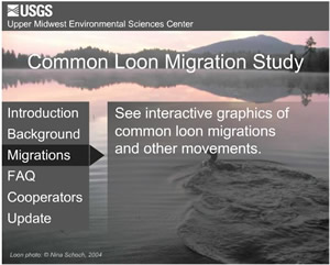 Common Loon Migration Study